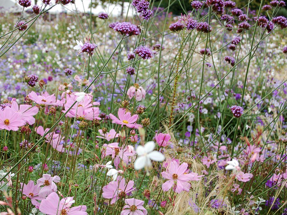Top Pflanzen-Vielfalt - der Saatgut-Shop: Stauden-Samen, Beet-Stauden @UB_82