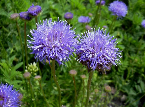 Pflanzen Vielfalt Der Saatgut Shop Stauden Samen Beet Stauden