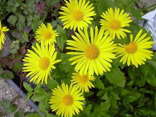 Pflanzen Für Schattigen Garten war schöne ideen für ihr haus ideen