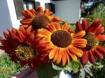 Orangerote Sonnenblume