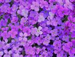 Violettes Blaukissen
